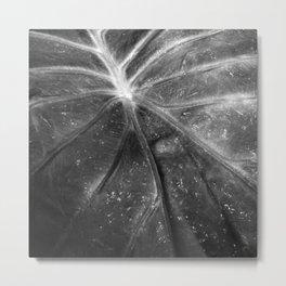 Abstract Leaf Black & White Metal Print