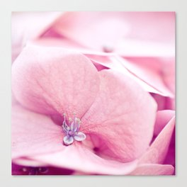 Sweetness of pink Canvas Print