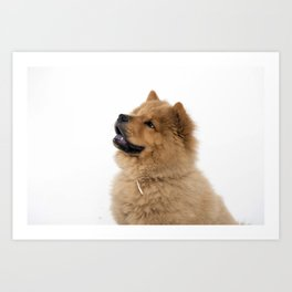 Chow Chow other profile Art Print