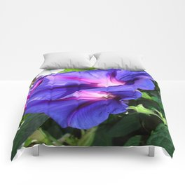 A Pair of Vibrant Morning Glories In Full Bloom Comforters