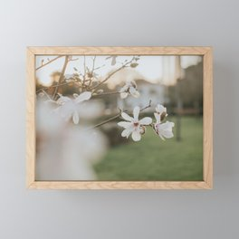 Pale Magnolia Framed Mini Art Print
