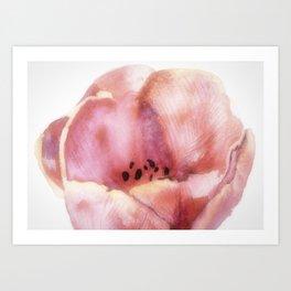 One Pink Tulip Art Print