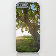 Morning In Danville iPhone 6s Slim Case