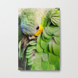 Sheepish bird - Parrot Metal Print