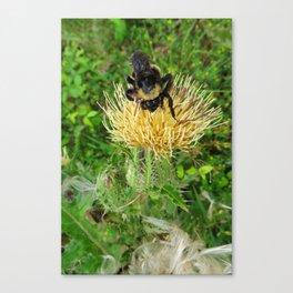 Bob the Rugged Bee Canvas Print