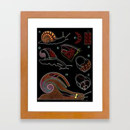 Paul Sougy: The Snail, 1955 (proceeds benefit The Nature Conservancy) Framed Art Print