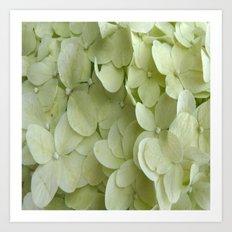 White on White Hydrangea Close Up Petals Art Print