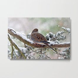 Peaceful Winter Dove Metal Print