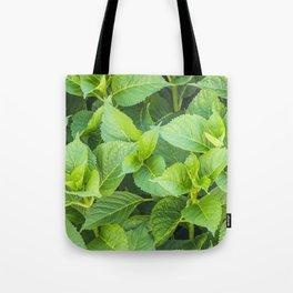 Garden of hydrangeas plants Tote Bag