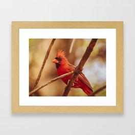 Male Northern Cardinal Framed Art Print