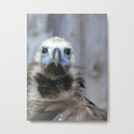 little vulture / kleiner geier Metal Print