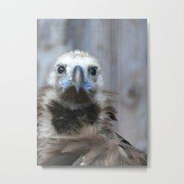 little vulture / kleiner geier Metal Print