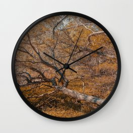 Fallen tree at Guadalupe River State Park Wall Clock