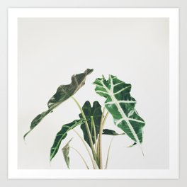 Elephant Ear Art Print