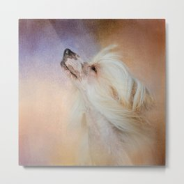 Wind In Her Hair - Chinese Crested Hairless Dog Metal Print