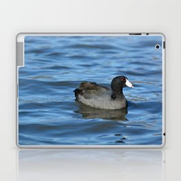 American Coot Laptop & iPad Skin