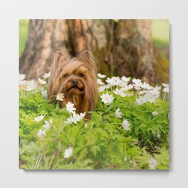 Summer Vibes - Small Yorkie Dog In Spring Forest #decor #society6 #buyart Metal Print