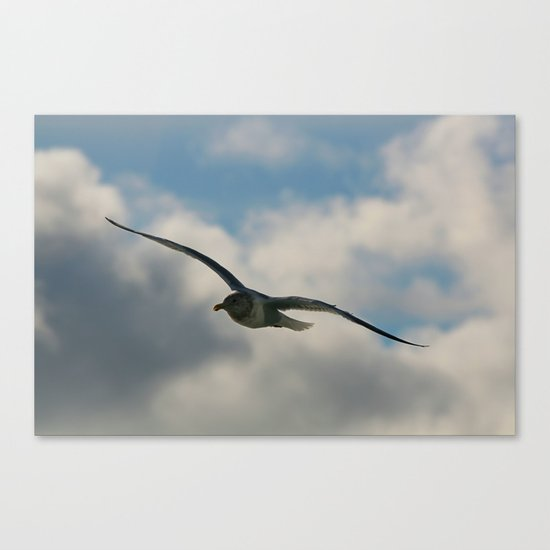 Graceful Wings Canvas Print