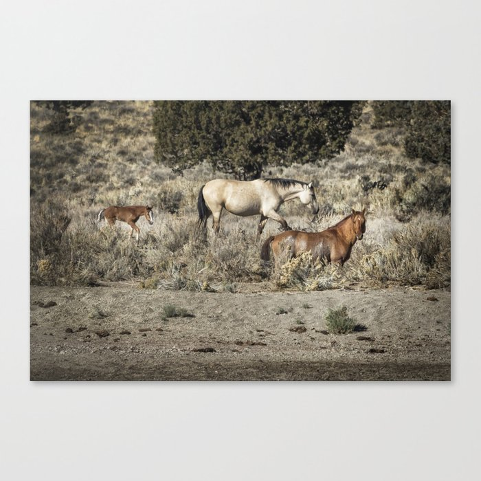 Safeguard This Tiny Foal Canvas Print