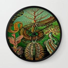 Chaetopoda Wall Clock