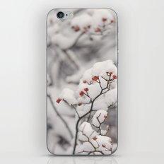 Red Winter iPhone & iPod Skin