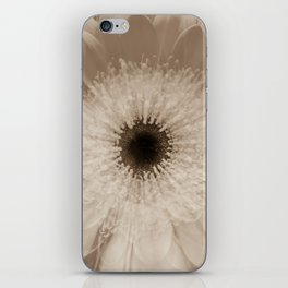 Chantilly Gerbera Daisy in sepia Gerber daisies iPhone Skin