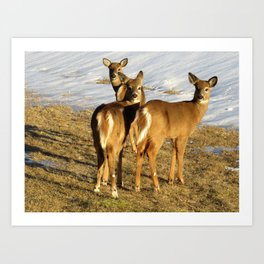 WHITE TAIL DEER (2 OF 3) - THREE IN THE SPRINGTIME Art Print