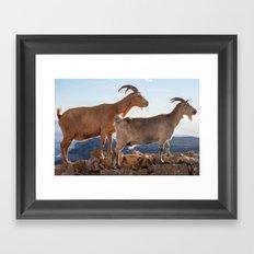Two goats full portrait 7639 Framed Art Print