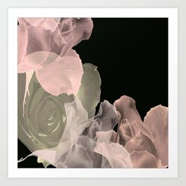 Blush Abstract Roses on Blackground Art Print