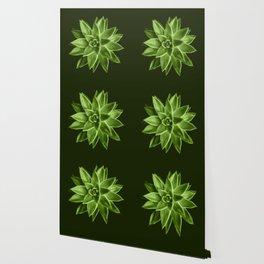 Greenery succulent Echeveria agavoides flower Wallpaper
