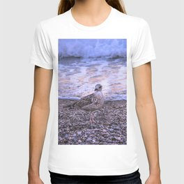 Seagull and sunset T-shirt