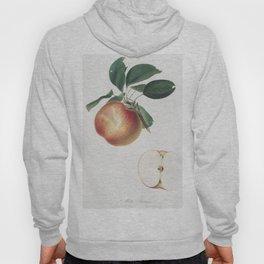 Apple (Malus domestica) from Pomona Italiana (1817 - 1839) by Giorgio Gallesio (1772-1839) Hoody