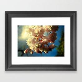 Cherry Blossoms in Hood River, Oregon Framed Art Print