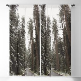 Redwood Forest Adventure II - Nature Photography Blackout Curtain
