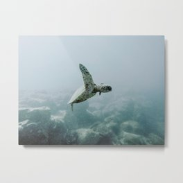 sea turtle iii / o'ahu, hawaii Metal Print
