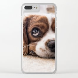 Cute dog with Big Innocent Eyes Clear iPhone Case