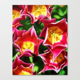 Spring Greatings Canvas Print
