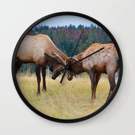 Bull elk in the rut season in Jasper National Park Wall Clock