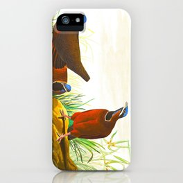 Blue-headed Pigeon iPhone Case