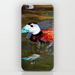 Whited Headed Duck iPhone Skin
