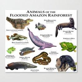Animals of the Flooded Amazon Rainforest Canvas Print