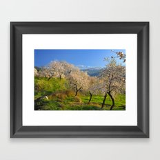 Flowering almond at the snowy mountains Framed Art Print