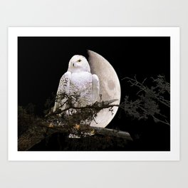 Snowy Owl A144 Art Print