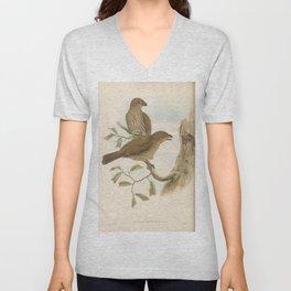 043 Toothed billed Bower bird scenopaeus dentirostris4 Unisex V-Neck