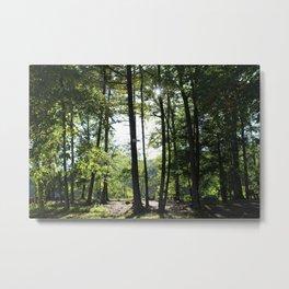 Topstone Park Metal Print