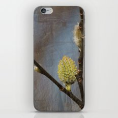 Spring Buds iPhone & iPod Skin