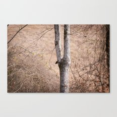 January Trees Canvas Print