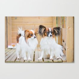 Outdoor portrait of a papillon purebreed dogs Canvas Print