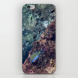 Lined Surgeonfish iPhone Skin