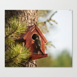 Brown Swallow Photography Print Canvas Print